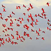 Scarlet Sky Art Print