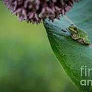 Schlitz Audubon Tree Frog Art Print