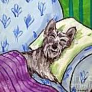 Schnauzer Sleeping Art Print by Jay  Schmetz