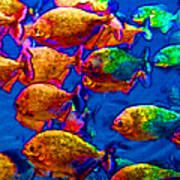 School Of Piranha V3 Art Print