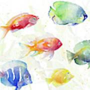 School Of Tropical Fish Art Print