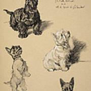 Scotch Terrier And White Westie Art Print