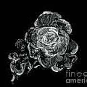 Scratched Rose Art Print