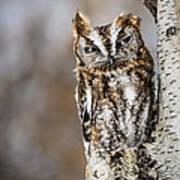 Screech Owl Checking You Out Art Print