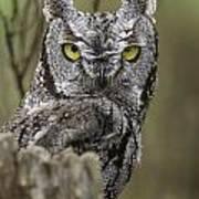 Screen Owl Art Print