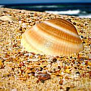 Sea Beyond The Shell Art Print