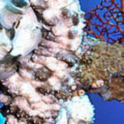 Sea Cucumbers 1 Art Print