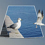Sea Gull Away Out Of Bounds Art Print