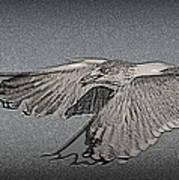Sea Gull Art Print