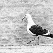 Sea Gull On Wharf Patrol Art Print