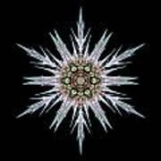 Sea Holly I Flower Mandala Art Print