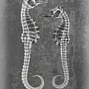 Sea Horses Sea Shell X-ray Art Art Print