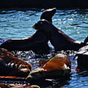 Sea Lions In San Francisco Bay Art Print