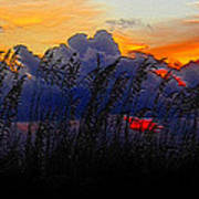 Sea Oat Sunset Art Print