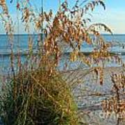Sea Oats 1 Art Print