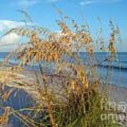 Sea Oats 2 Art Print