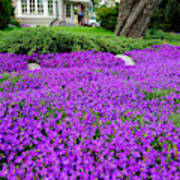 Sea Of Flowers Outside House And Garden Art Print