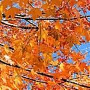 Sea Of Orange And Blue Art Print