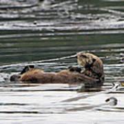 Sea Otter Profile Art Print