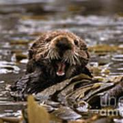Sea Otters Art Print