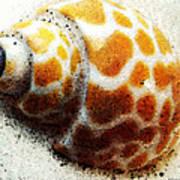Sea Shell Beach Painting Art Art Print