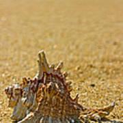 Sea Shell By The Sea Shore Art Print