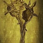Sea Shell 1 Art Print
