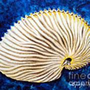 Sea Shell Original Oil On Canvas No.2. Art Print by Drinka Mercep