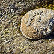 Sea Shell Rock Art Print