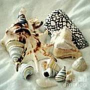 Sea Shells- Colorful Collection Art Print