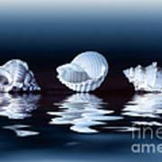 Sea Shells On Water Art Print