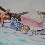 Sea Shells Two Art Print