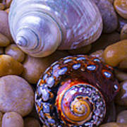 Sea Snail Shells Art Print