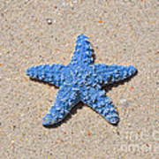 Sea Star - Light Blue Art Print