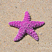 Sea Star - Pink Art Print