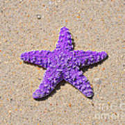 Sea Star - Purple Art Print by Al Powell Photography USA