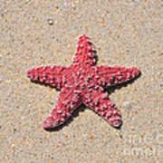 Sea Star - Red Art Print