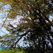 Sea Through Trees Art Print