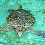 Single Sea Turtle Swimming Through The Water Art Print