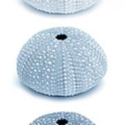 Sea Urchins Blues Vertical Art Print