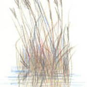 Seagrass 1 Art Print