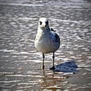 Seagull At Low Tide Art Print