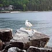 Seagull Awaits Art Print