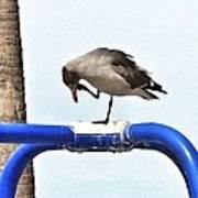 Seagull Balancing Act Art Print