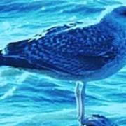 Seagull Basking In The Sun Art Print