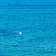 Seagull Cruising Over Azure Blue Sea Art Print
