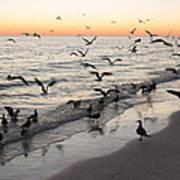 Seagulls Feasting Art Print