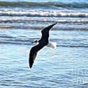Seagull Flight Art Print