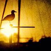 Seagull In Harbor Sunset Art Print