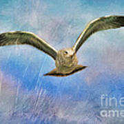Seagull In The Storm Art Print